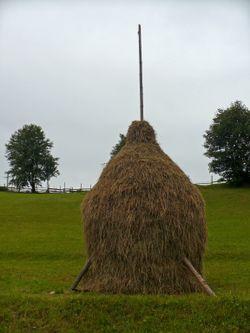Vatra dornei haystack