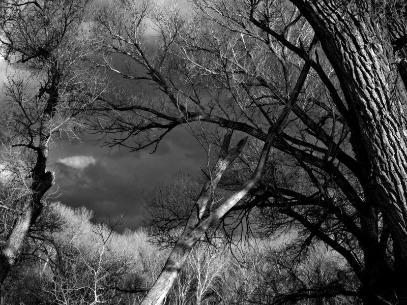 San pedro cottonwoods_1BW_low
