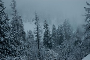 Snow_forest_low_res