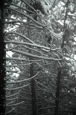Kamiak_snow_nov06lowres3