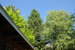Rooftrees_low_res