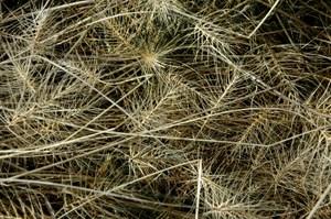Wawawai_grasses_low_res